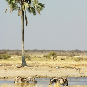Safari in Etosha National Park
