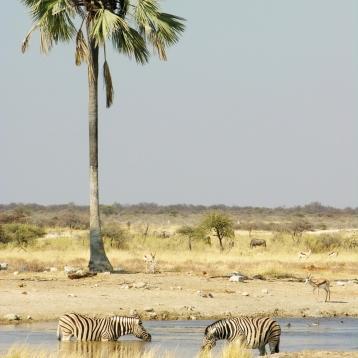 Safari in Etosha National Park