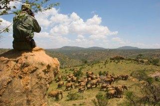 Elephants at Ol Malo