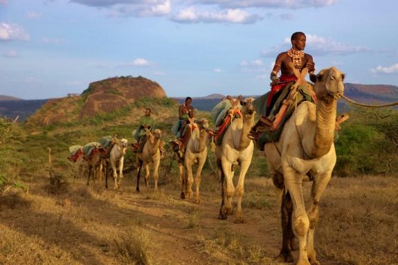 Camel Trekking in Laikipia