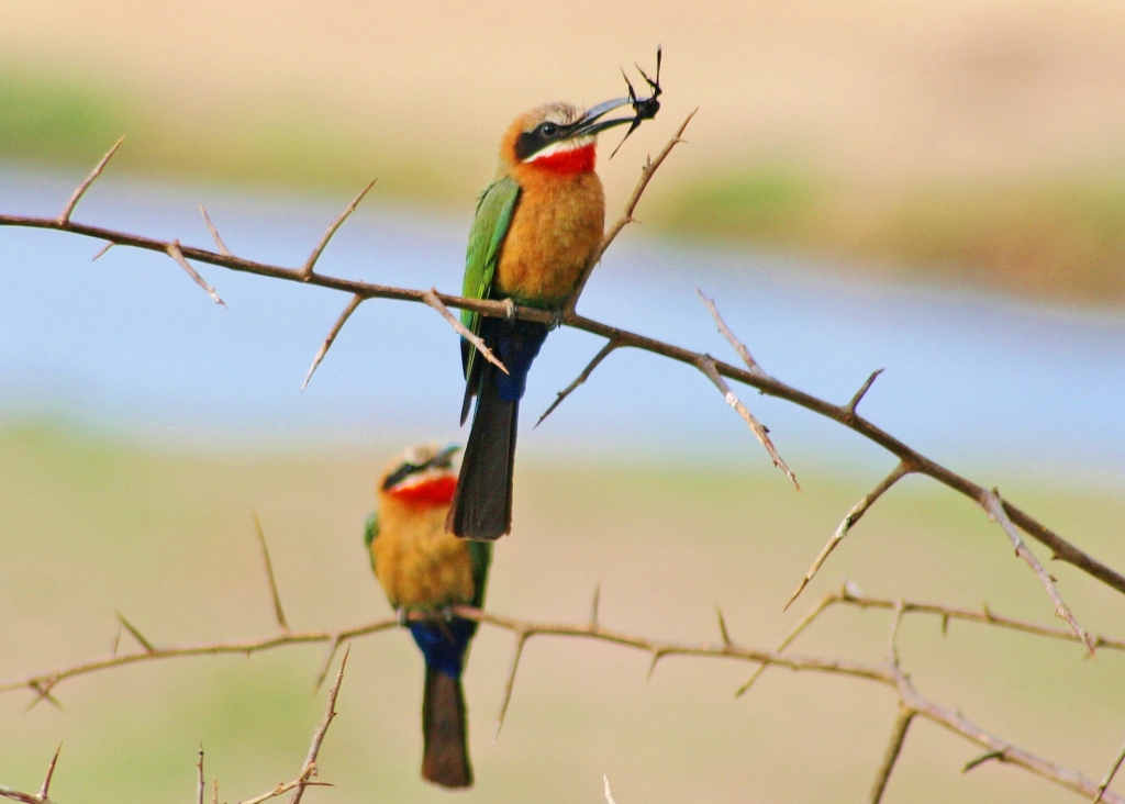 Birdwatching safaris in Zambia