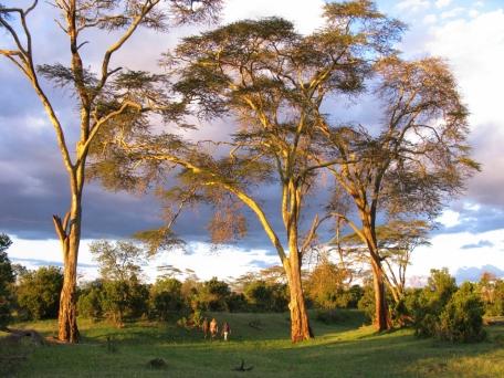Walking Safari from Ol Pejeta Bush Camp