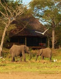 Elephants at Siwandu Safari Camp