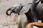 Self drive safari in Etosha National Park