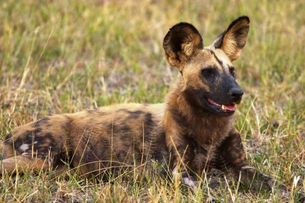 Safari in the South Luangwa