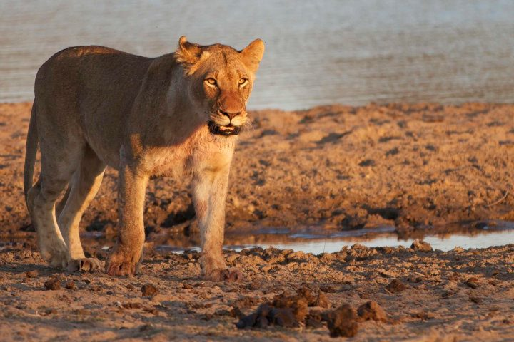 Safari in the Sabi Sands