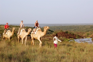 Camel safari from Sosian
