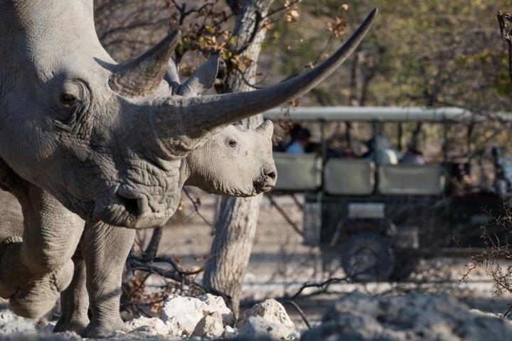 Rhino at Ongava Tented Camp