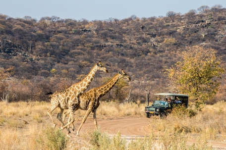 Game Drive at Ongava Tented Camp