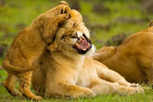 Karen Blixen Camp Lion