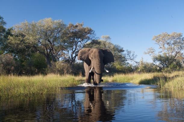 Stanley's Camp Elephant