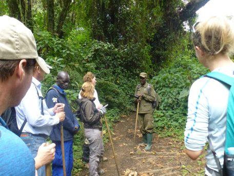Gorilla trekking Volcanoes NP