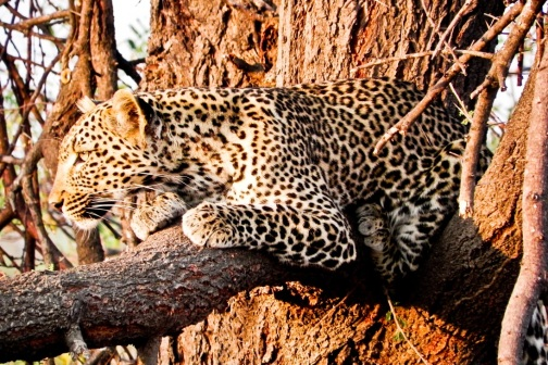 Game viewing from Mwagusi