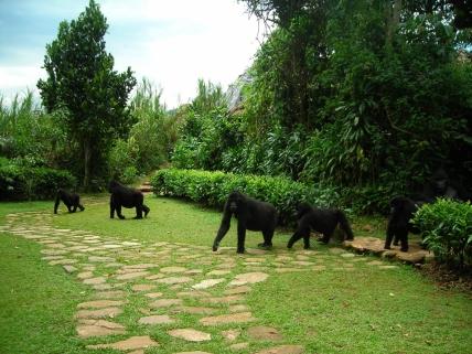 Bwindi Lodge Uganda Gorillas