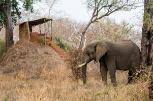 Mwamba Bush Camp