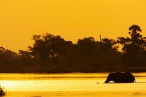 Zarafa Sunset