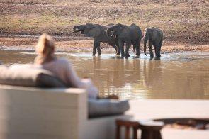 Chinzombo Elephants