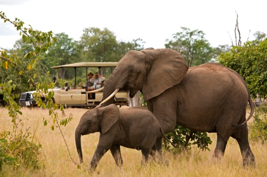 Game Drive From Chichele Lodge