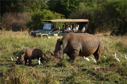 Rhinos on Game Drive