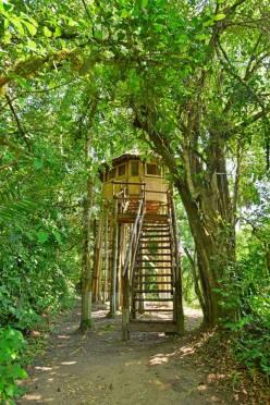 Sky Tree House