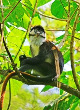 (c) Primate Lodge