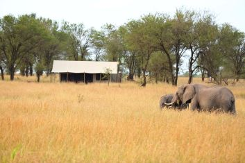 Elephants in Camp