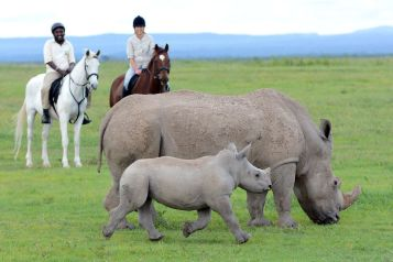 Horse riding with the rhinos