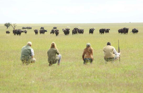 Walking safaris