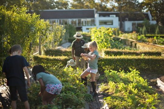Farm learning at Boschendal