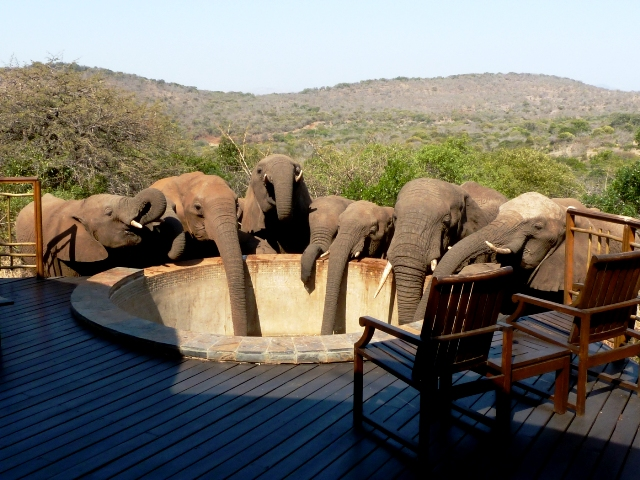 Ellies emptying the plunge pool