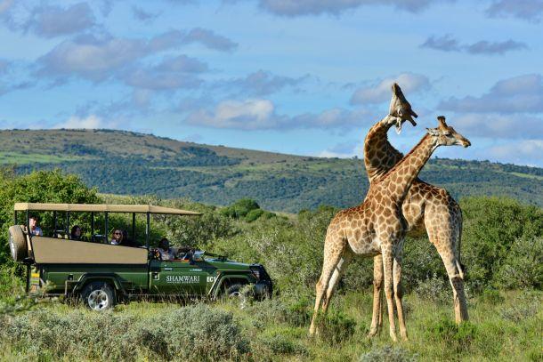 On safari at Riverdene