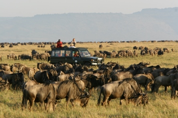 Rekero Migration