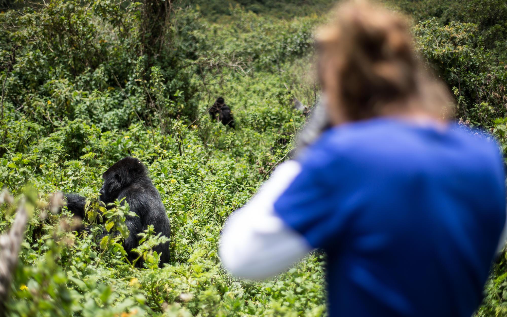 Magahinga Gorilla Trekking