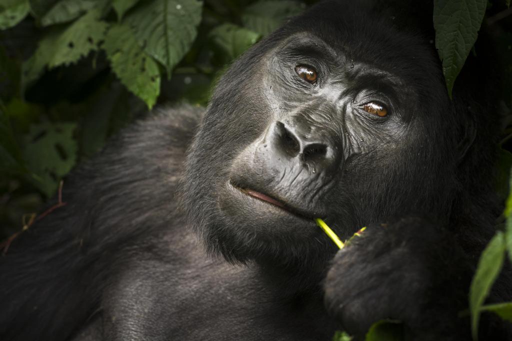 Gorilla Trekking from Buhoma Lodge