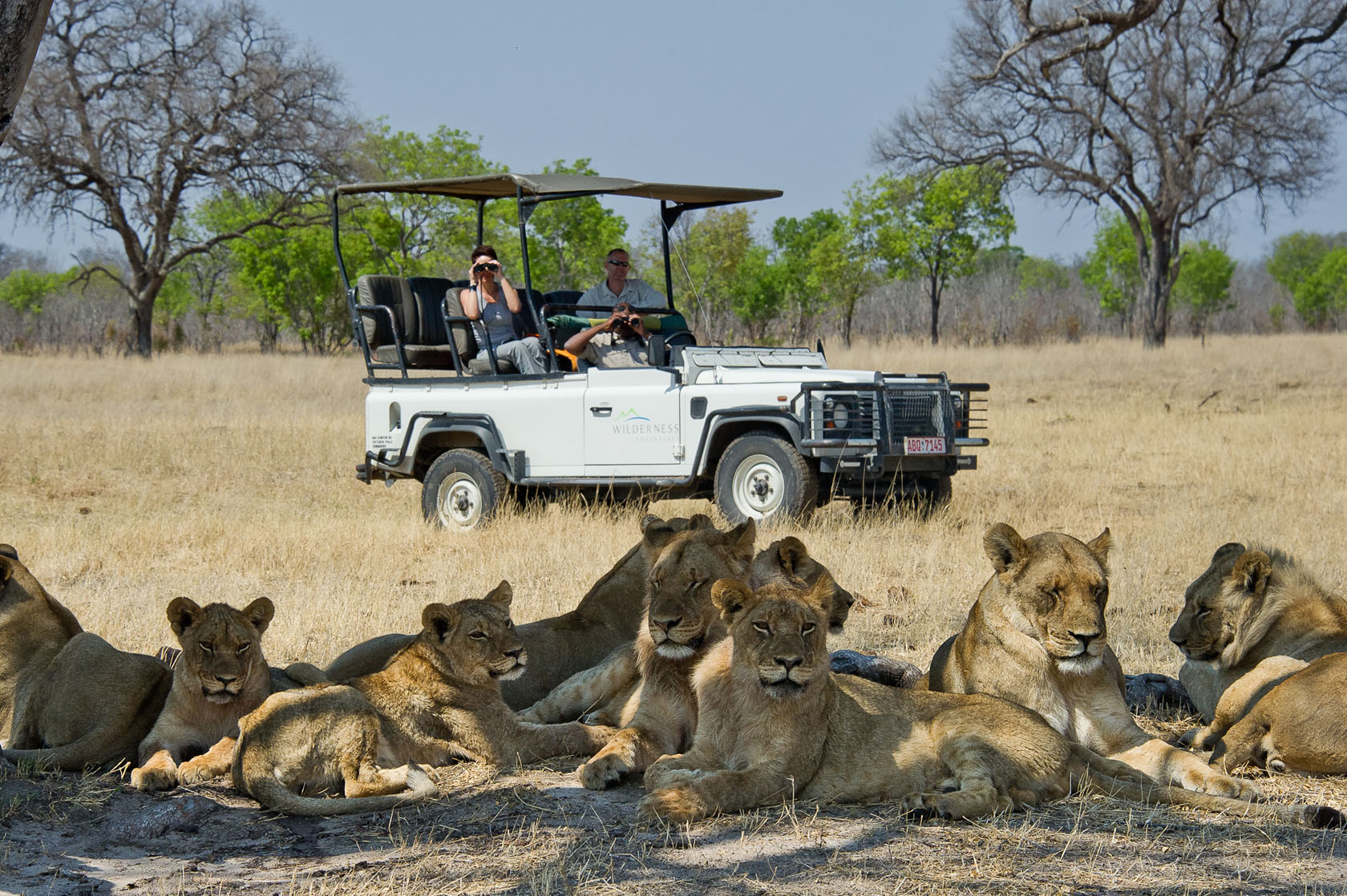 Lions near Davisons Camp, Hwange