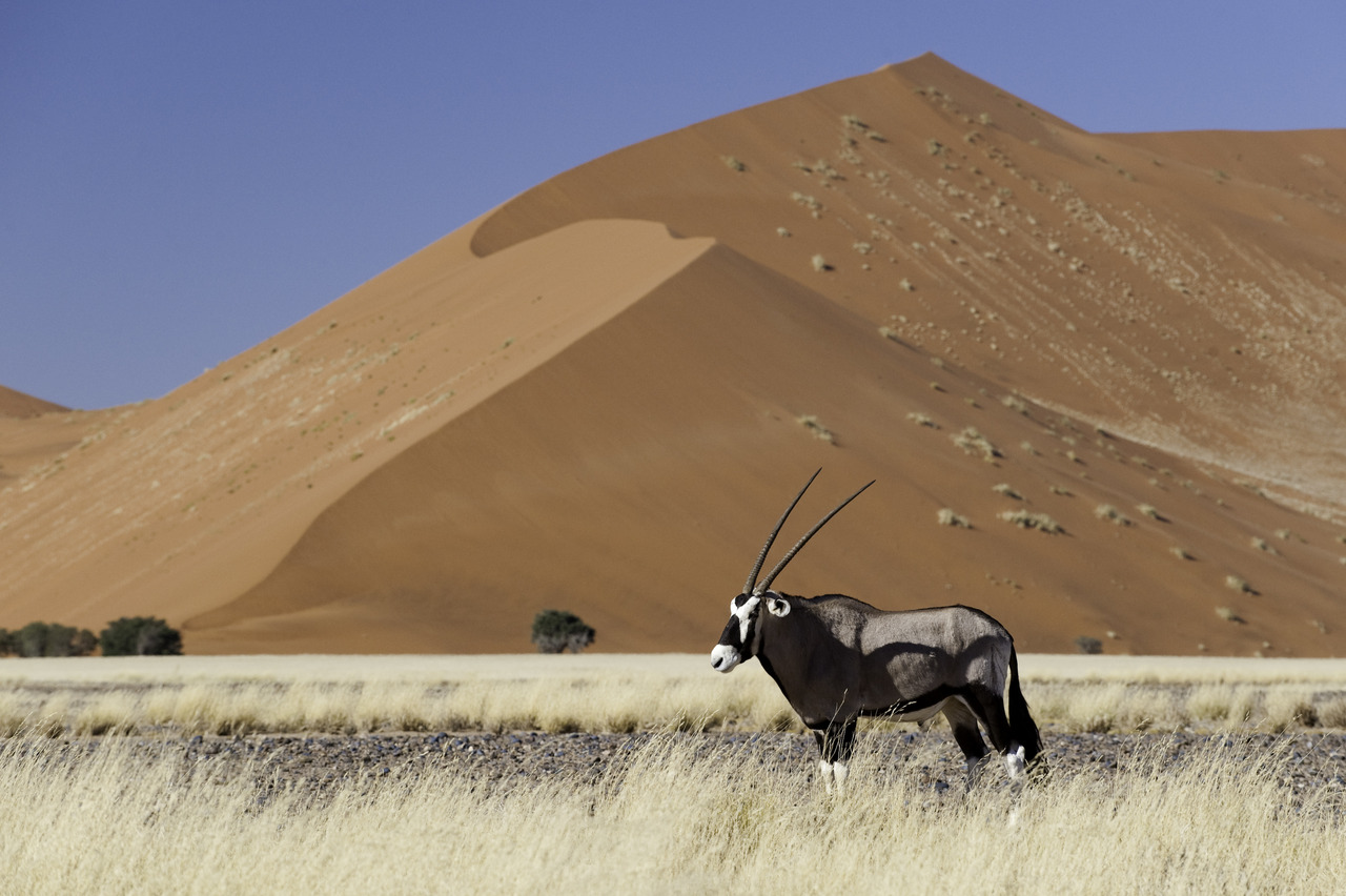 (c) Wilderness Safaris